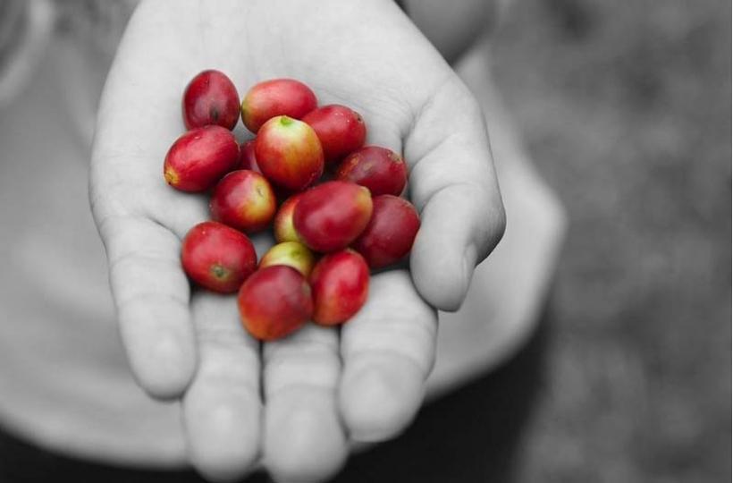 Колумбийский кофе. История, особенности, секреты популярности