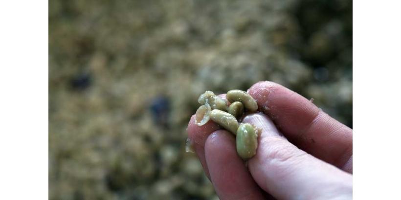 Контролируемая ферментация — основа вкуса кофе.