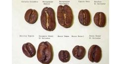 Разновидности кофе: Типика, Бурбон и три производные из Бразилии